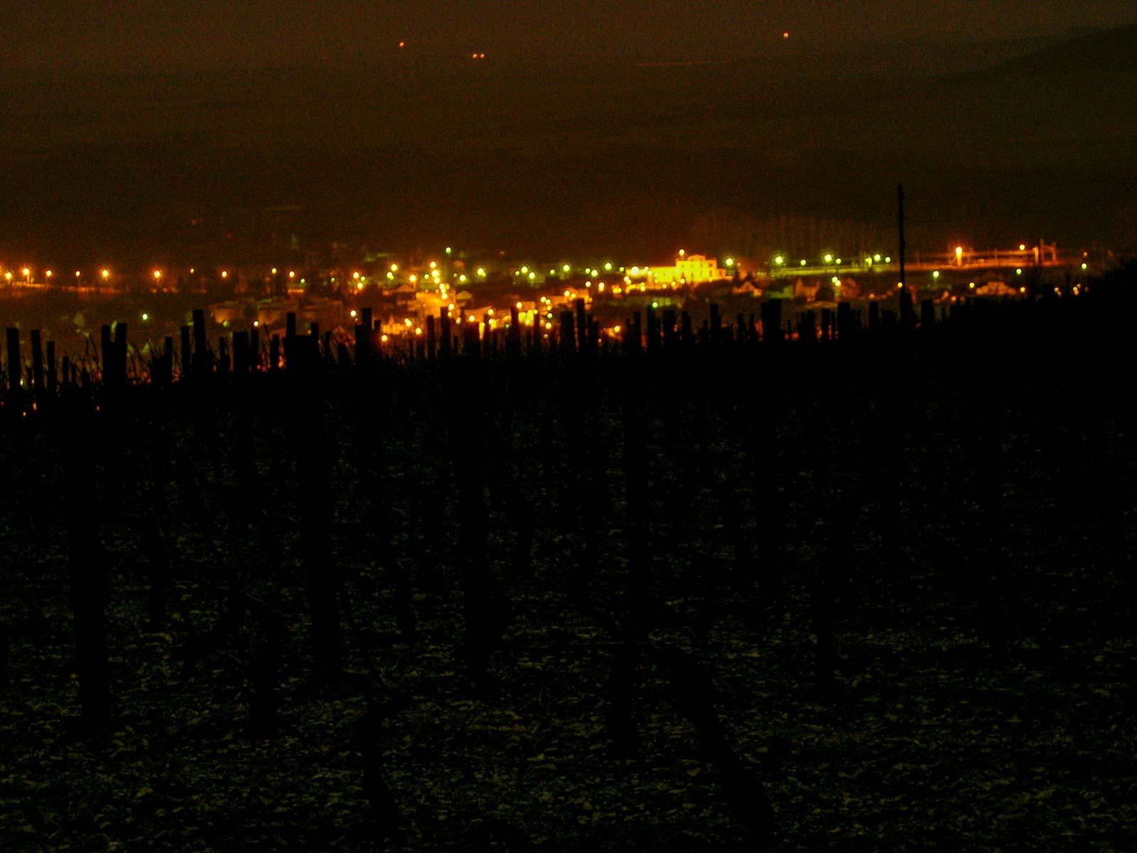 photographie-vignes-joigny